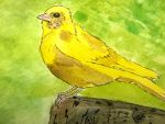 Canary by GentlestGiant