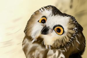 Saw-Whet Owl by GinJuice