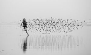 Chasing Birds by ScooterTheDog