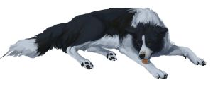 Border Collie :D by cottondragon
