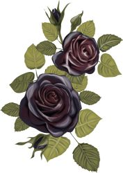 Black Roses by 8LouLou8