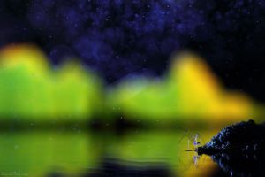 Starry Night by AimishBoy