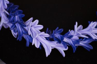 detail of a well-made lei by Dancing-Treefrog