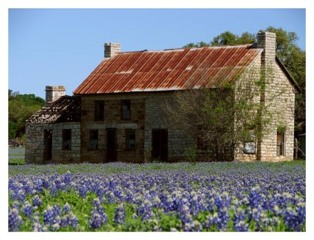 Spring in Texas by Silverbug