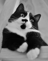 Cat Perspective by hennatea