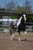 DWP FREE HORSE STOCK 40 by DancesWithPonies