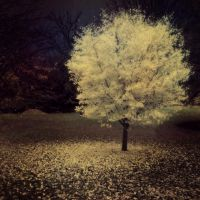 Little World by intao