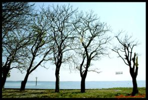 Trees on beach by crything