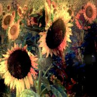 Sunflowers and Dark by MikeHenry