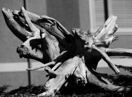Driftwood by MoonlitRain011