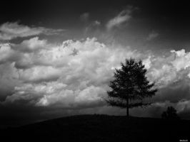 Landscape Noir -2- by Merkosh