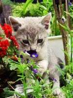 Kitty in the garden by KissOnTheRain