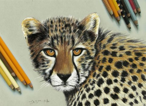 Young Cheetah - colored pencil drawing by JasminaSusak