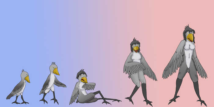 Shoebill Transformation Sequence by Kathalia