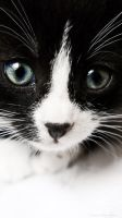 M III cat's eyes... by Lady-Avees