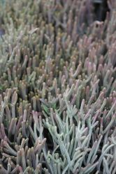 Succulents 2 by ChinookDesigns