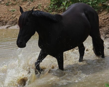 Black Beauty - Water Stock 8 of 13 by Lovely-DreamCatcher