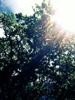 Tree In The Park by celinex24