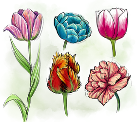 Flower Study 1: Tulips by SachiiA