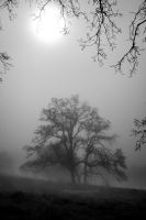 Light in the fog by kayaksailor