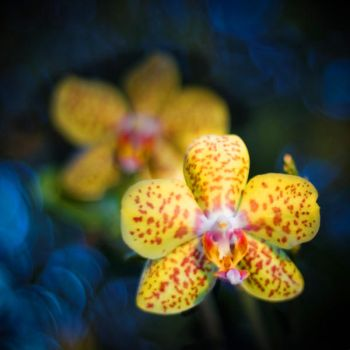 Orchids by imladris517