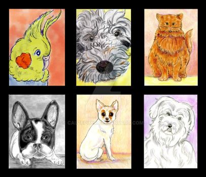 2018 CCEE Pet Sketches by calzephyr