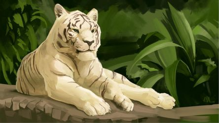 White Tiger Study - 2 hours by Tokoldi