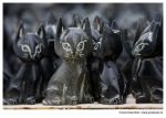 Cats of Cappadocia by Grim-Jester
