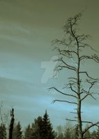 mr.Old Tree by buymeariver