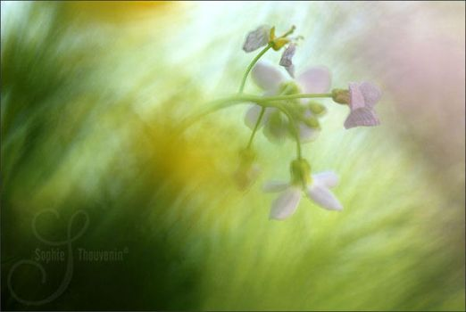 spring is fading by prismes