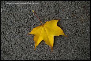 First Yellow Leaf of Autumn by Hitomii