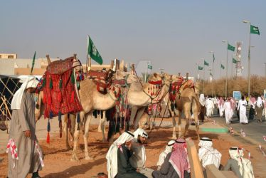 Camels show by salemsf
