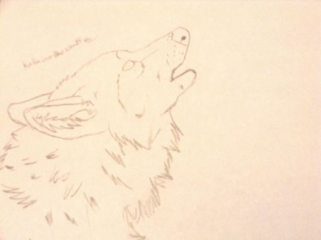 Realistic wolf drawing by Katniss-The-Wolf