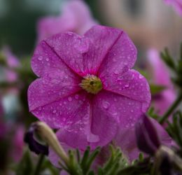 Pluvial flower by Lola22
