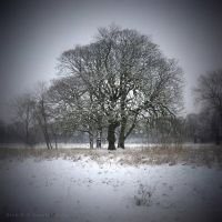 Winter tree for Alice by lostknightkg