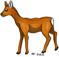 Deer by Colax3