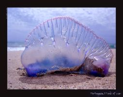 Man of war by Sidarta