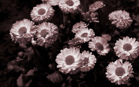 Flowers by canaris1780
