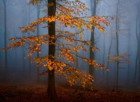 Spark of Autumn by aw-landscapes