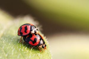 Love of Ladybugs by fire