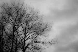 Cloudy Tree by mprangenberg