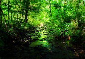 Creek of Envy by tommymurphy