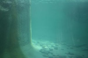 Tautphaus Zoo 93 Under Water by Falln-Stock