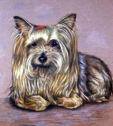 Yorkshire-Terrier by ArtsandDogs