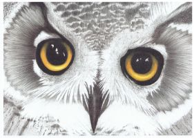 Owl 001 by luckynumber29