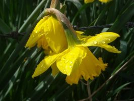 drops of spring rain on by loobyloukitty