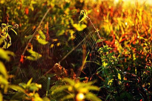 spider's web by azia600