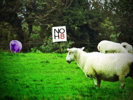 No H8 by inner-outsider