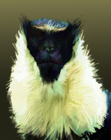 Diana Monkey by RaerBear