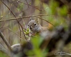 Squirrel in the willows by themanitou